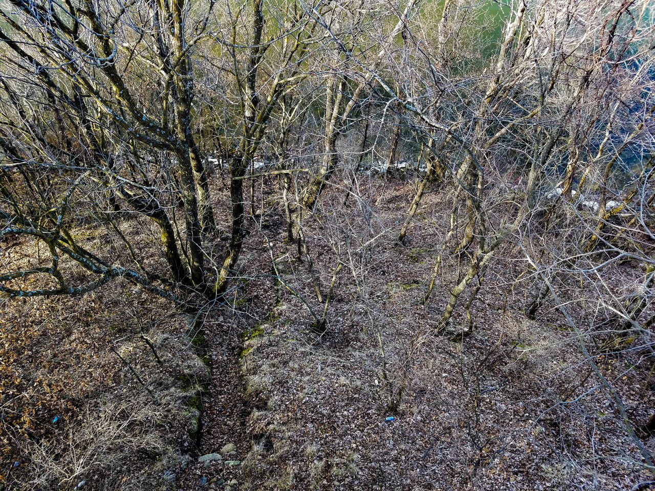 Backgrounds Full Frame No People Nature Growth Abstract Beauty In Nature Outdoors Day Trees Reflection Lake Scenics Lake Koronis March 2017 Springtime Spring Bare Trees Minnesota Koronis Regional Park Forest Water View From Above Above The Trees Looking Down