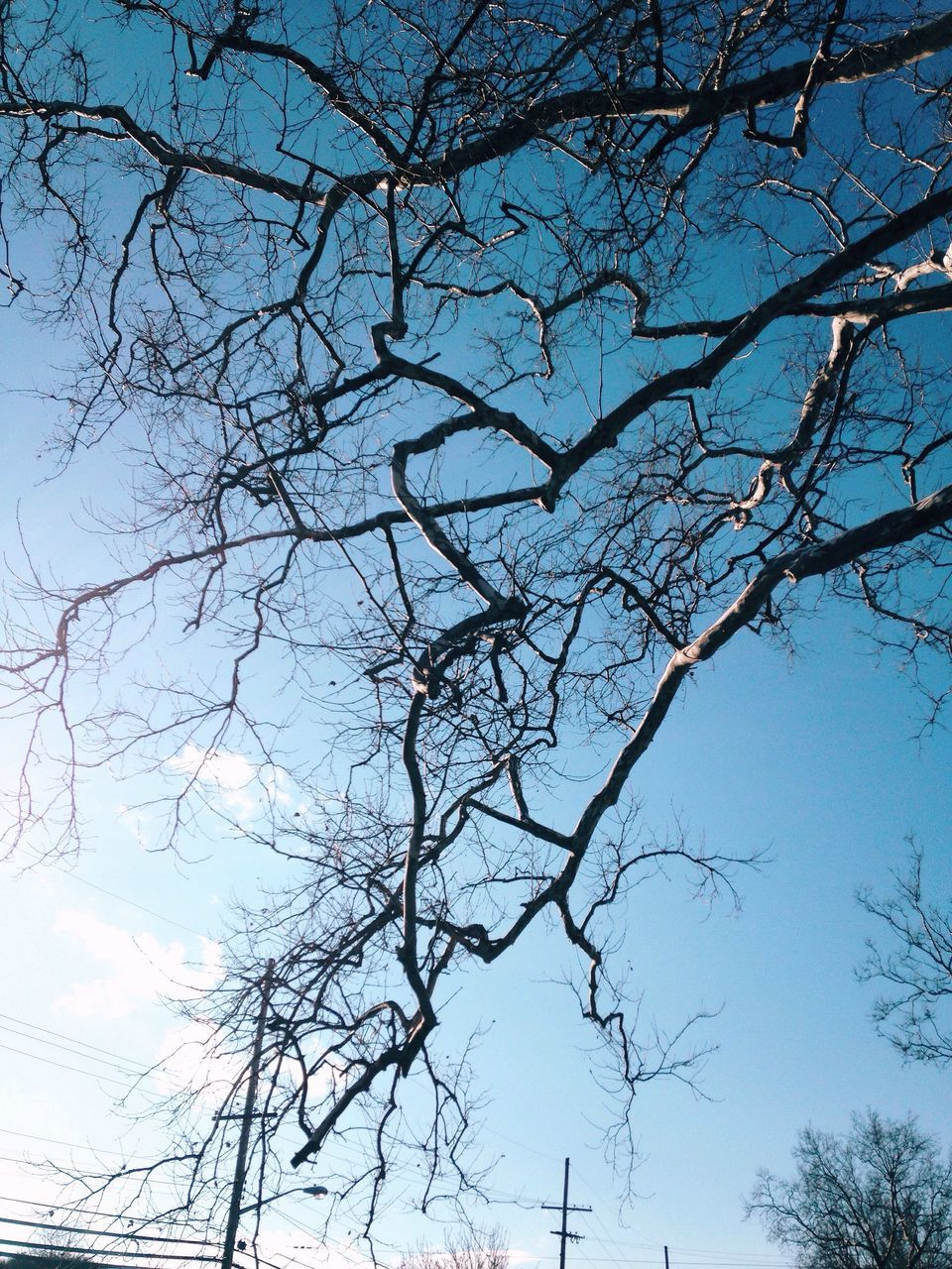 low angle view, tree, nature, beauty in nature, bare tree, branch, no people, tranquility, sky, day, outdoors, scenics