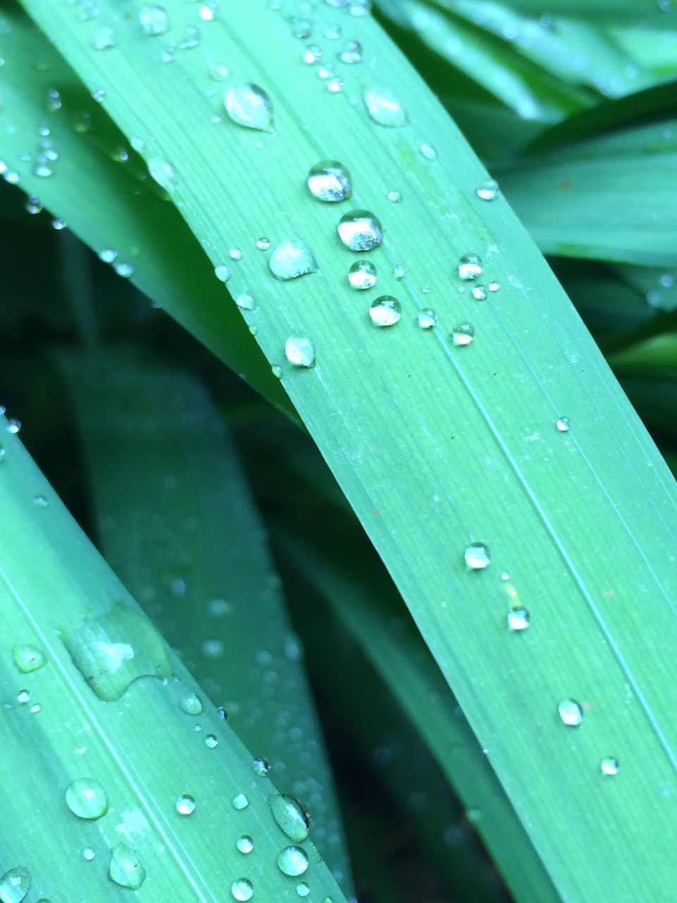 drop, green color, wet, rain, leaf, nature, raindrop, outdoors, water, day, close-up, weather, no people, beauty in nature, growth, freshness, fragility, banana leaf, plant, backgrounds, animal themes