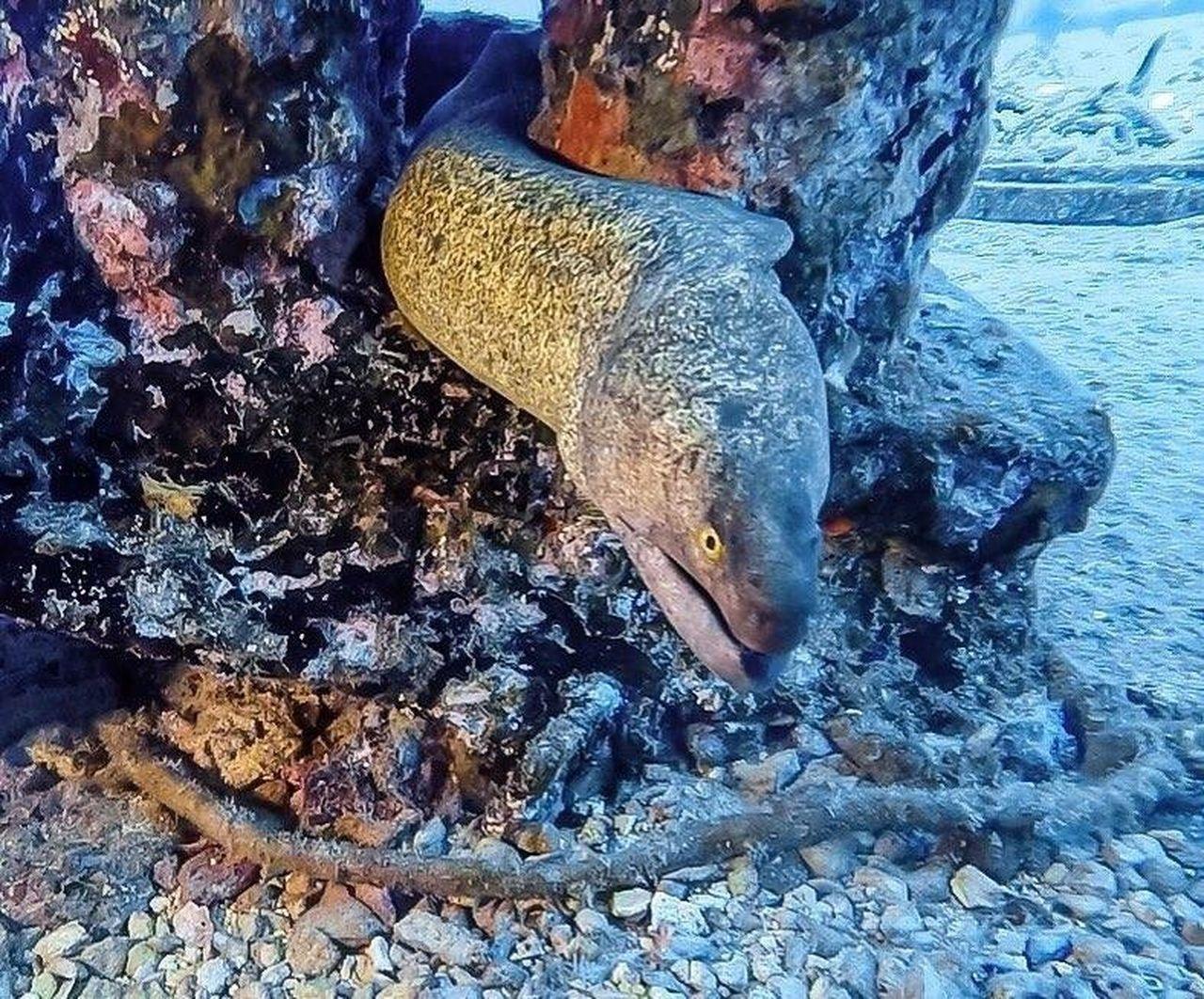 Eel Underwater Underwater Photography Sea Life Living Life Padi SCUBA Scuba Diving Nature Adventure Underthesea Oahu Pacific Ocean