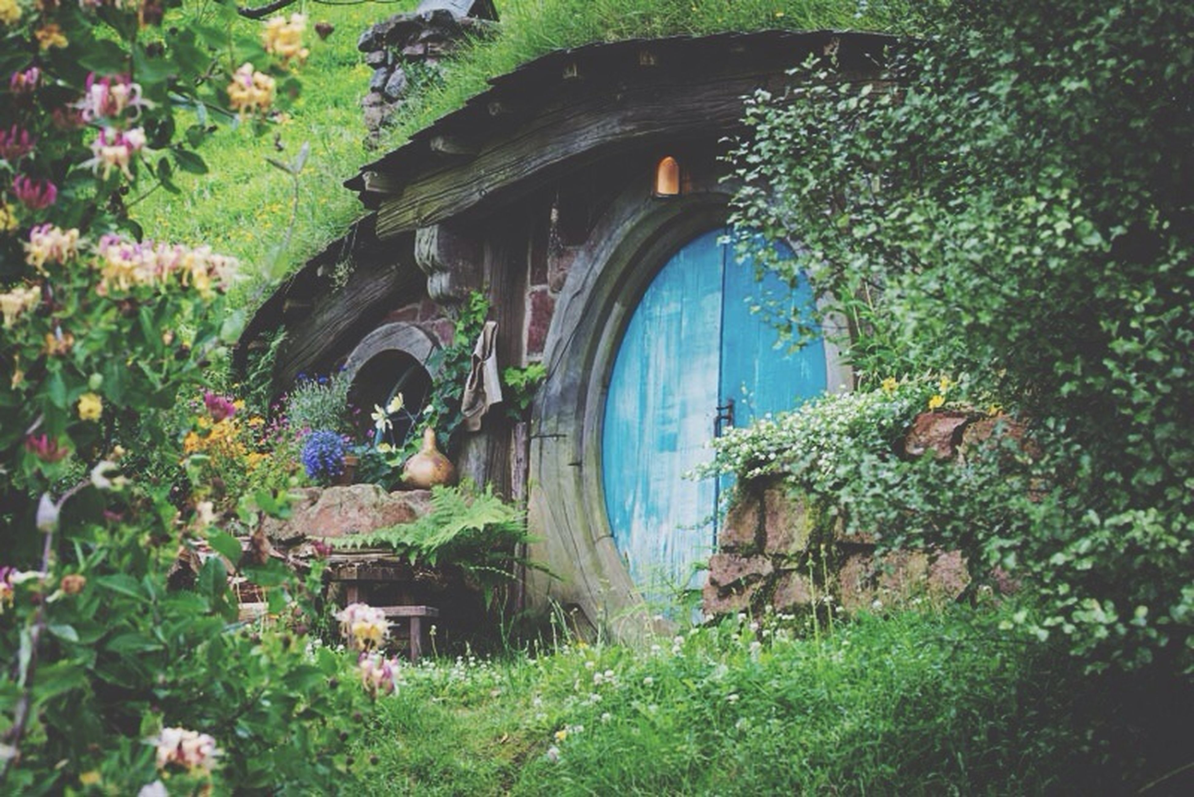 plant, built structure, abandoned, architecture, growth, grass, building exterior, old, green color, obsolete, damaged, house, tree, day, run-down, field, deterioration, flower, no people, outdoors