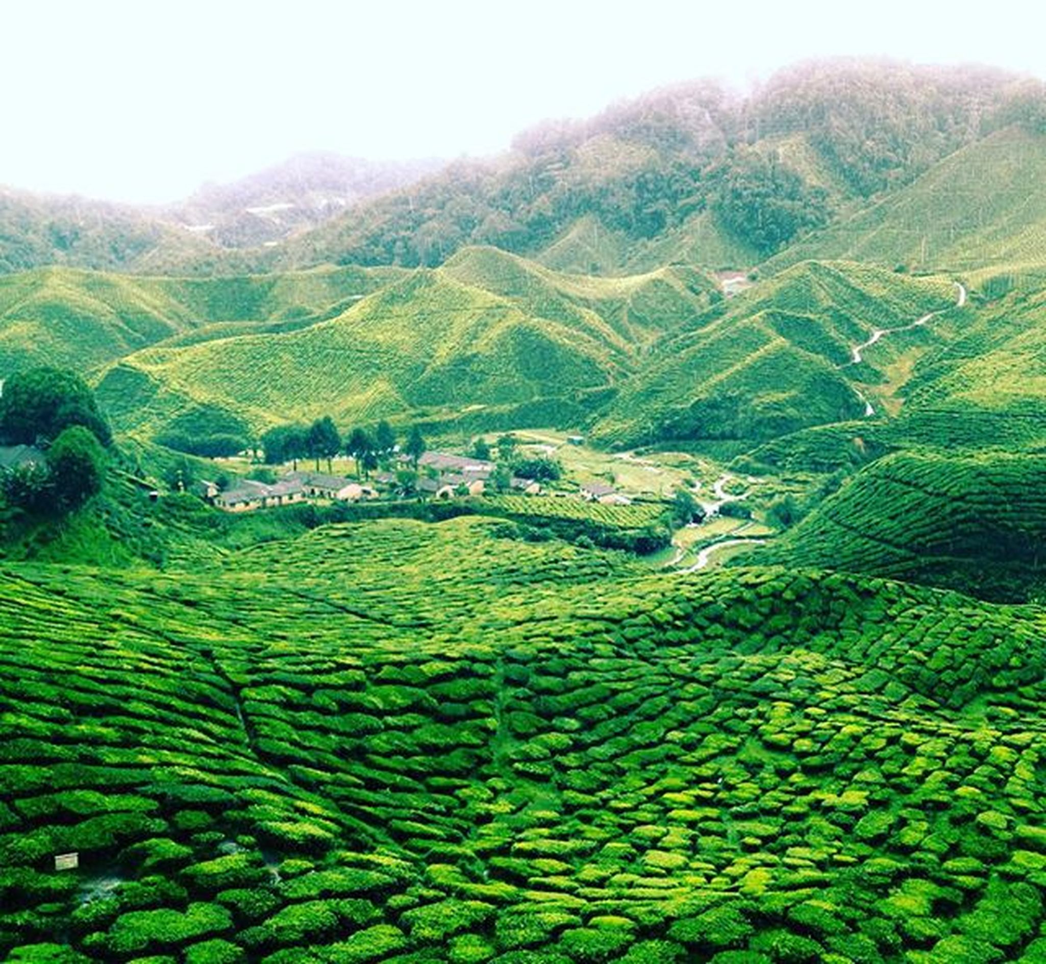 CameronValley Culinaryadventures Teahouse Cameronhighlands Pahang Malaysianig Instagram Instaphoto Photooftheday Afternoonwalk Travellingram Travel Travelling Culture Teaplantation Lifestyle Adventure Igers