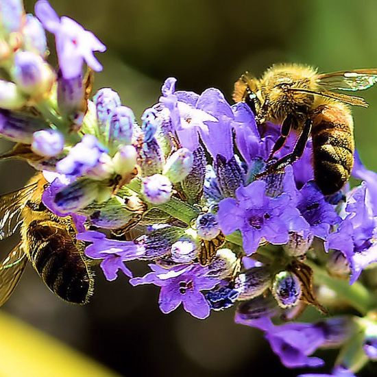 Wasp Wasps Bees Exposure Focus Capture Fotographia NatureIsBeautiful Insect Flowers Summer Nature Details Macro Picture Beeporn
