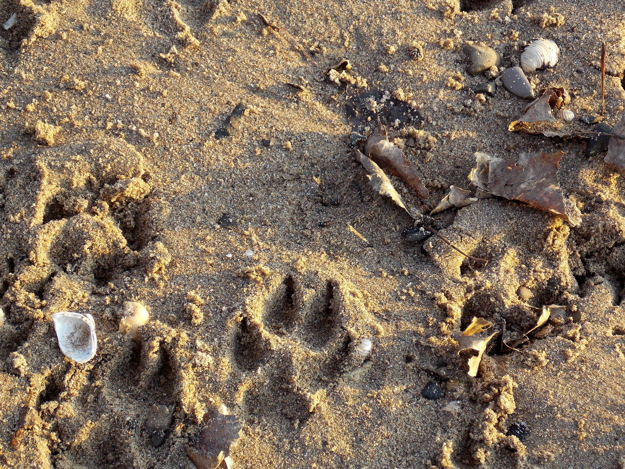 traces in the sand Traces In The Sand Dog Muschelschalen Remenber Sand