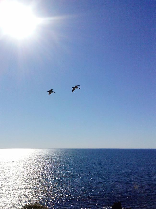 Corona Del Mar Eyem Nature The Moment - 2015 EyeEm Awards The Artsy LensCalifornia Seascape Ocean LG Phone Camera Creative Light And Shadow Ladyphotographerofthemonth Blue Wave The Great Outdoors With Adobe