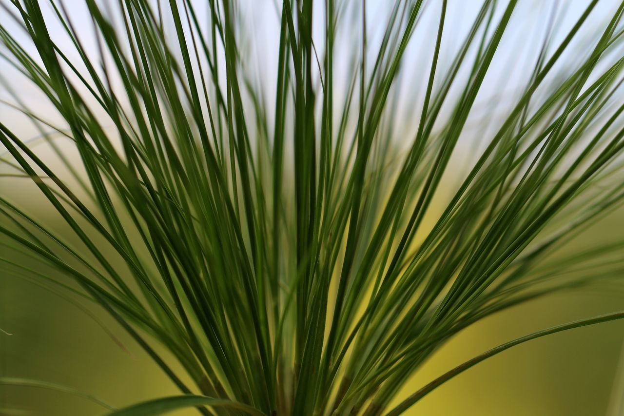 Palm Tree Palm Leaf Frond Close-up Tree No People Green Color Leaf Nature Growth Day Outdoors Freshness Sky