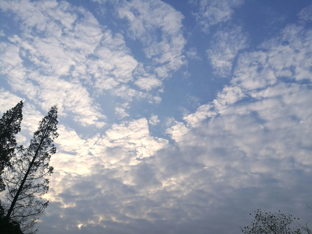 low angle view, sky, cloud - sky, nature, beauty in nature, no people, tranquility, day, outdoors, scenics, tree, growth