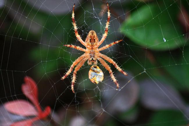 Beaty In Nature Detail Focus On Foreground Natur Nature Spider Spider Catching Insect Spiderweb Spinne Spinne Fängt Beute Spinnennetz Spinnweben