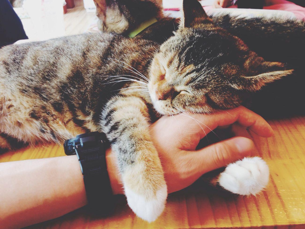 @순천 다락방 고양이. 팔베고 잠든 가을이
