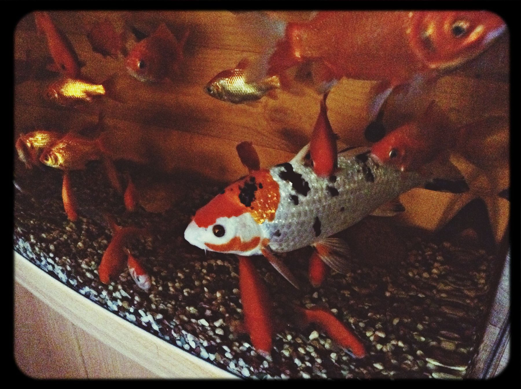 Fish Underwater World Hello World Enjoying Life