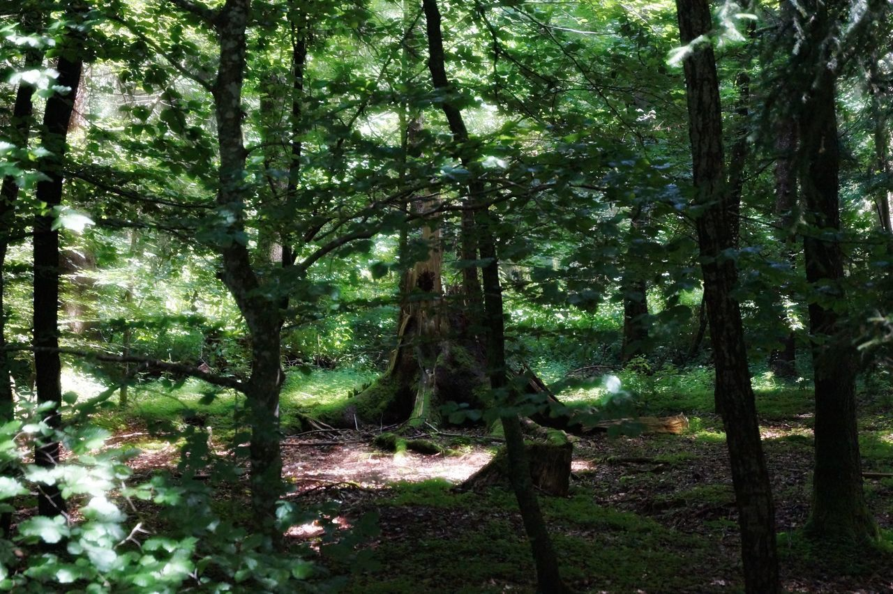Chiemsee Summer 2016 Forest Grass Nature No People Outdoors Tree Tree Trunk WoodLand