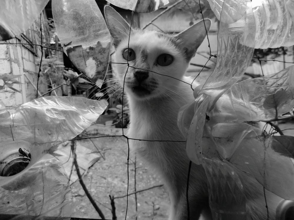 trying to see the other side Taking Photos Check This Out Hello World Cats Cat Stranger Strange Faces Life Beyond The Wall Eyeemphoto Eyeem Photo Monochrome Photography Prodigious Lit Long Goodbye The Photojournalist - 2017 EyeEm Awards