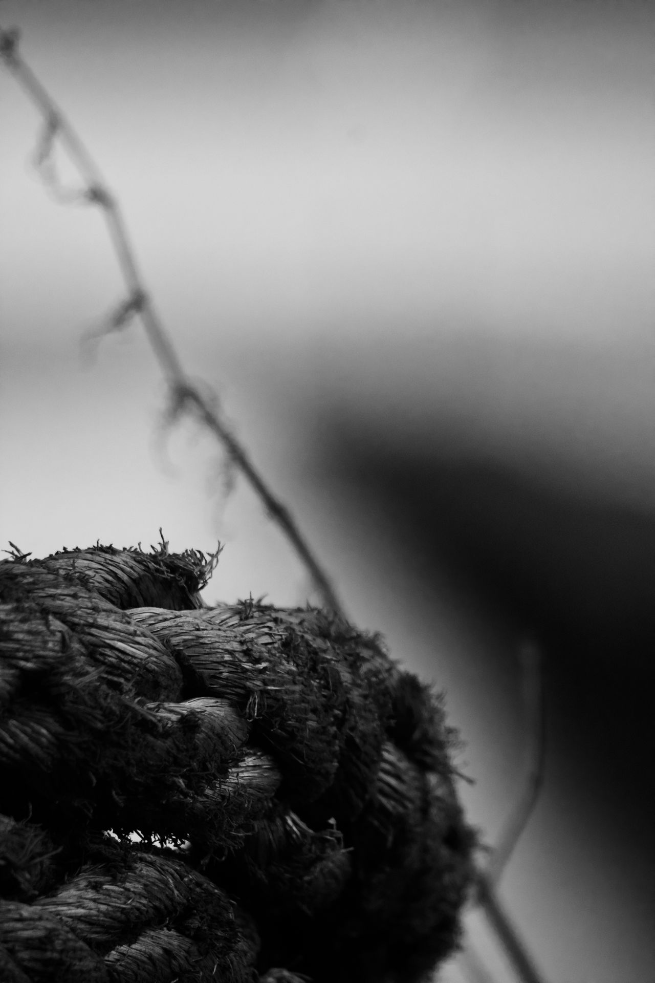 Close-up Day Dof Dof Nature Focus On Foreground Nature Nikon No People Outdoors Rope Sky