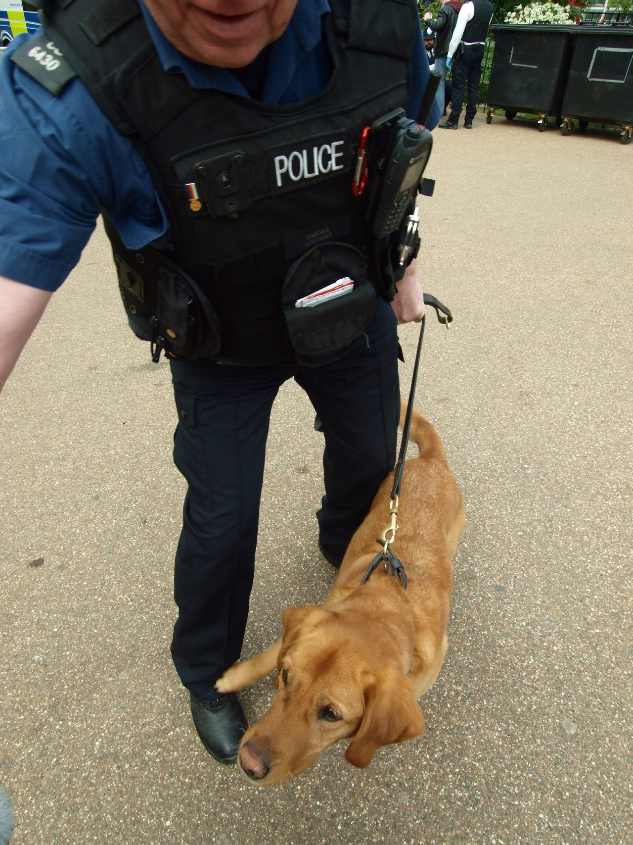 PC a Nightingale and Millie the drug sniffer dog conducting searches at the London 420 Rally to legalise Canabis 20-04-2017 Hyde Park Dog Canabis Metropolitan Police 420 Rally Drug Sniffer Dogs London News Steve Merrick Stevesevilempire Canabisculture London Lifestyle London Canabbis Olympus Zuiko Policing