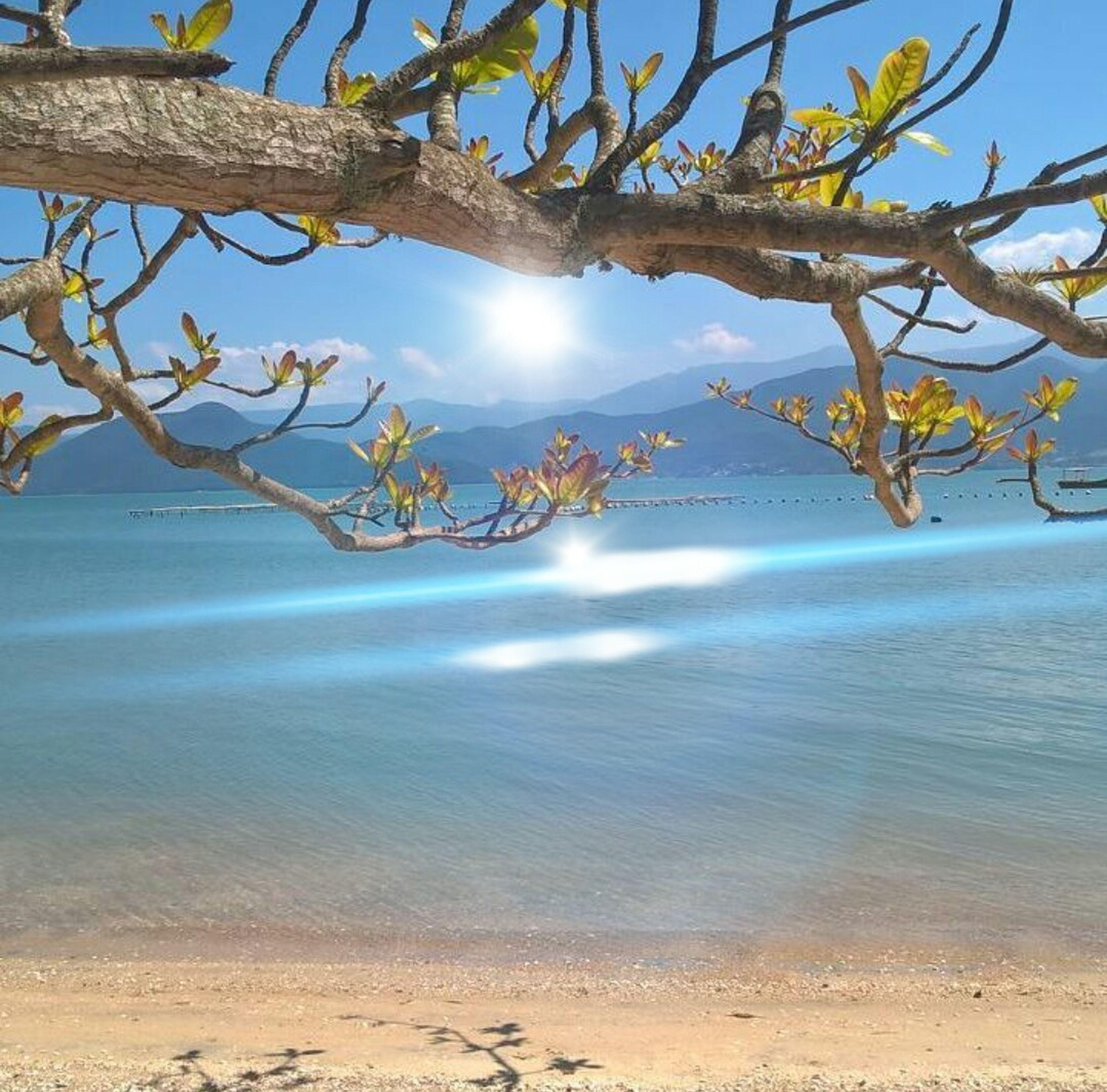 sea, water, branch, beach, scenics, horizon over water, tranquil scene, shore, sand, tranquility, beauty in nature, sky, nature, blue, calm, cloud, seascape, coastline, non-urban scene, outdoors, day, mountain, remote, no people, cloud - sky, solitude, majestic