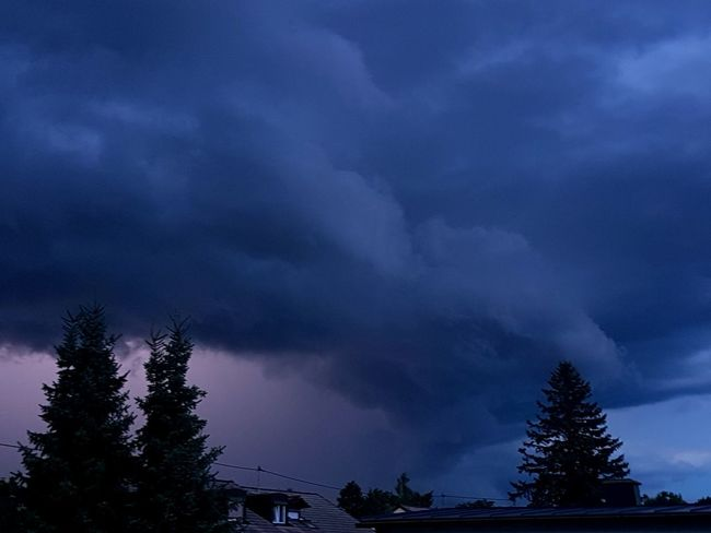 Tree Dramatic Sky Nature Cloud - Sky No People Pinaceae Pine Tree Scenics Beauty In Nature Storm Outdoors Thunderstorm Storm Cloud Night Sky Silhouette EyeEmNewHere