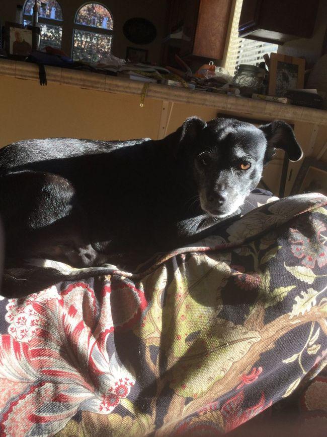 Arbella, picture taken by Violet alone! No filter, no edit! Little Black Dog