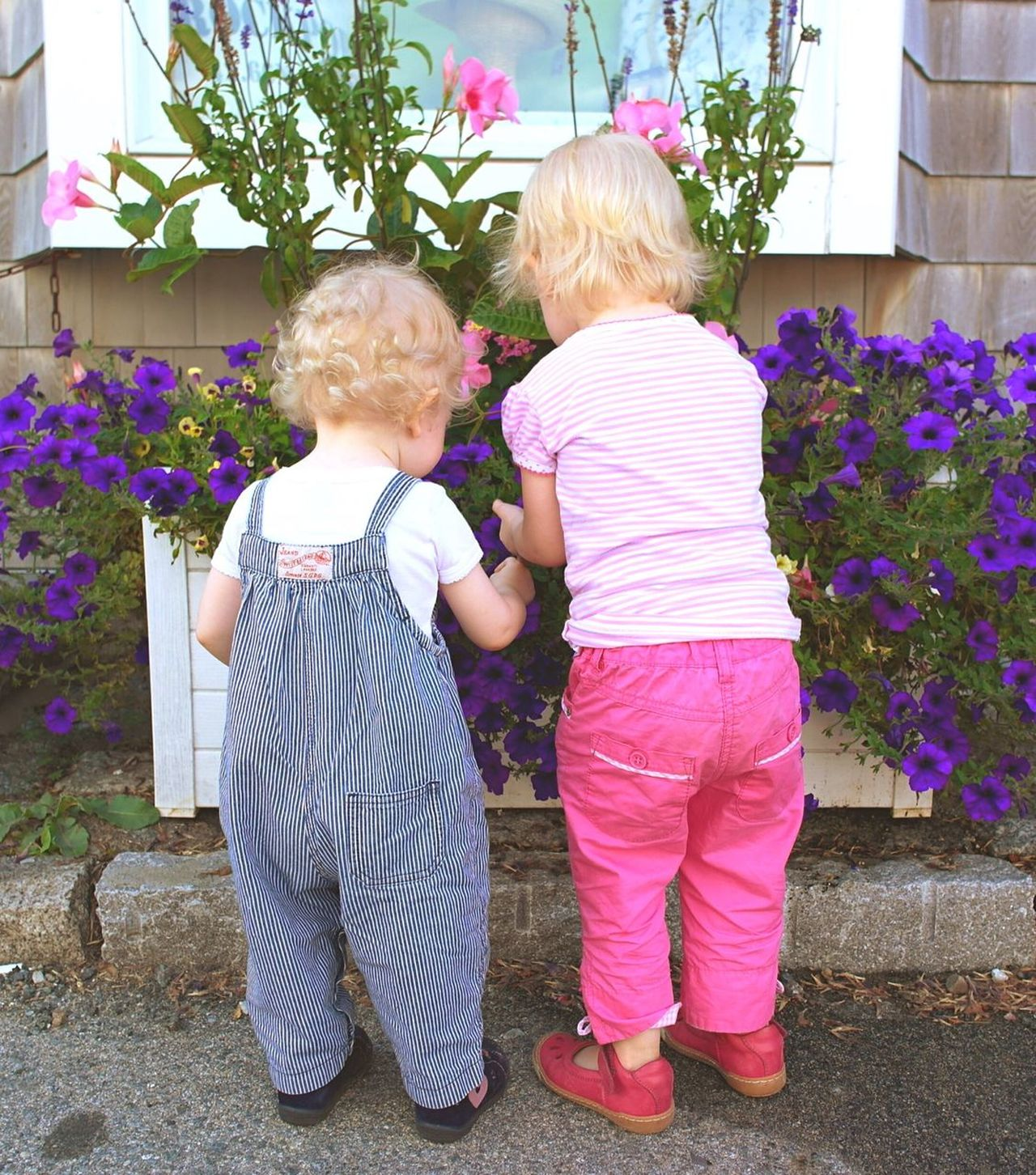 Pastel Power Girls Toddler  Toddlers  Toddlerlife Blonde Hair Blonde Flowers Flowers,Plants & Garden The Street Photographer - 2016 EyeEm Awards New England Charm New England Summer Life In New England