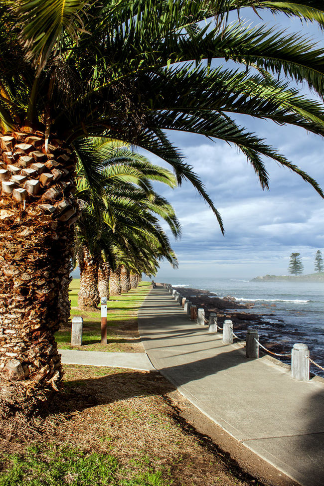 walking path along the sea Beauty In Nature Cloud - Sky Footpath Landscape Landscape_photography Nature Non-urban Scene Ocean Outdoors Scenics Sea Sky Solitude Tourism Tranquil Scene Tranquility Tree Tree Trunk Vacations Walking Path Walkway Water