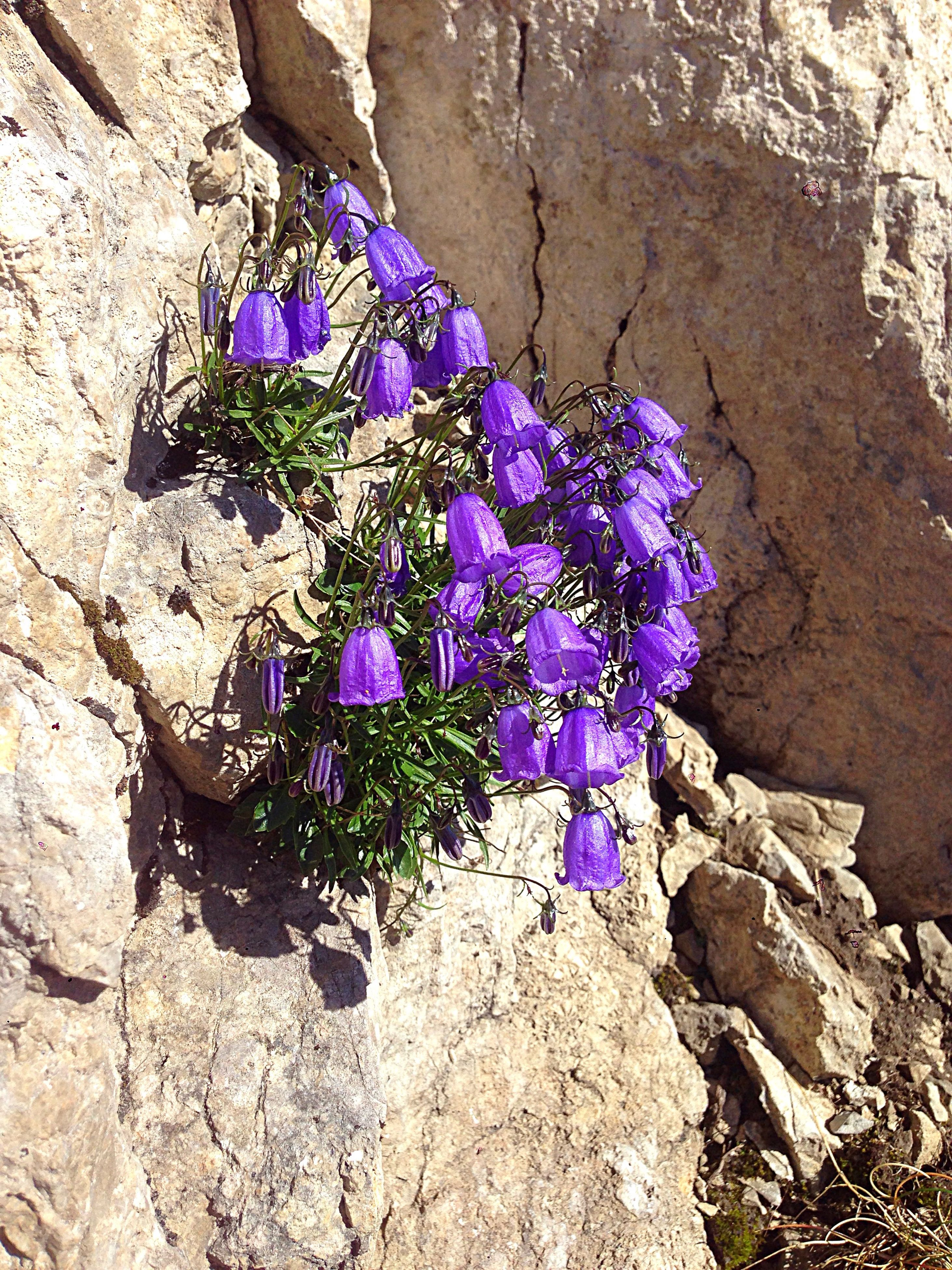 flower, rock - object, purple, day, nature, sunlight, outdoors, beauty in nature, growth, plant, no people, high angle view, fragility, close-up, freshness, flower head, crocus