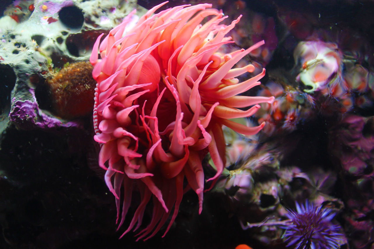 Anenome. Aquarium Anenome Aquatic Life Ocean Coral Water Nature Nature's Diversities