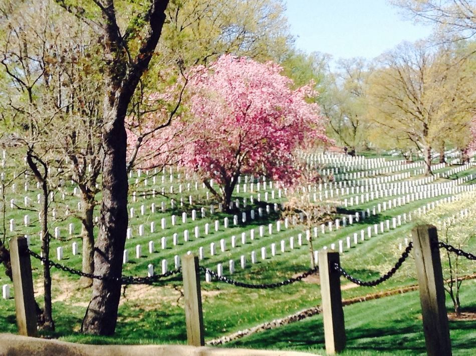 The Human Condition Arlington National Cemetary All Human Conditions end with Death May God Bless All Future Soldiers And The Families Of Former Soldiers. From my DC Trip.