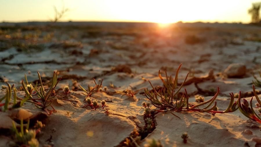 A small desert Nature Sunlight Sunset Outdoors Close-up Beach Beauty In Nature Sun Sand Capture The Moment The Adventure Handbook The EyeEm Facebook Cover Challenge My Favorite Photo Plant Day No People Tranquility Arid Climate Grass EyeEmNewHere