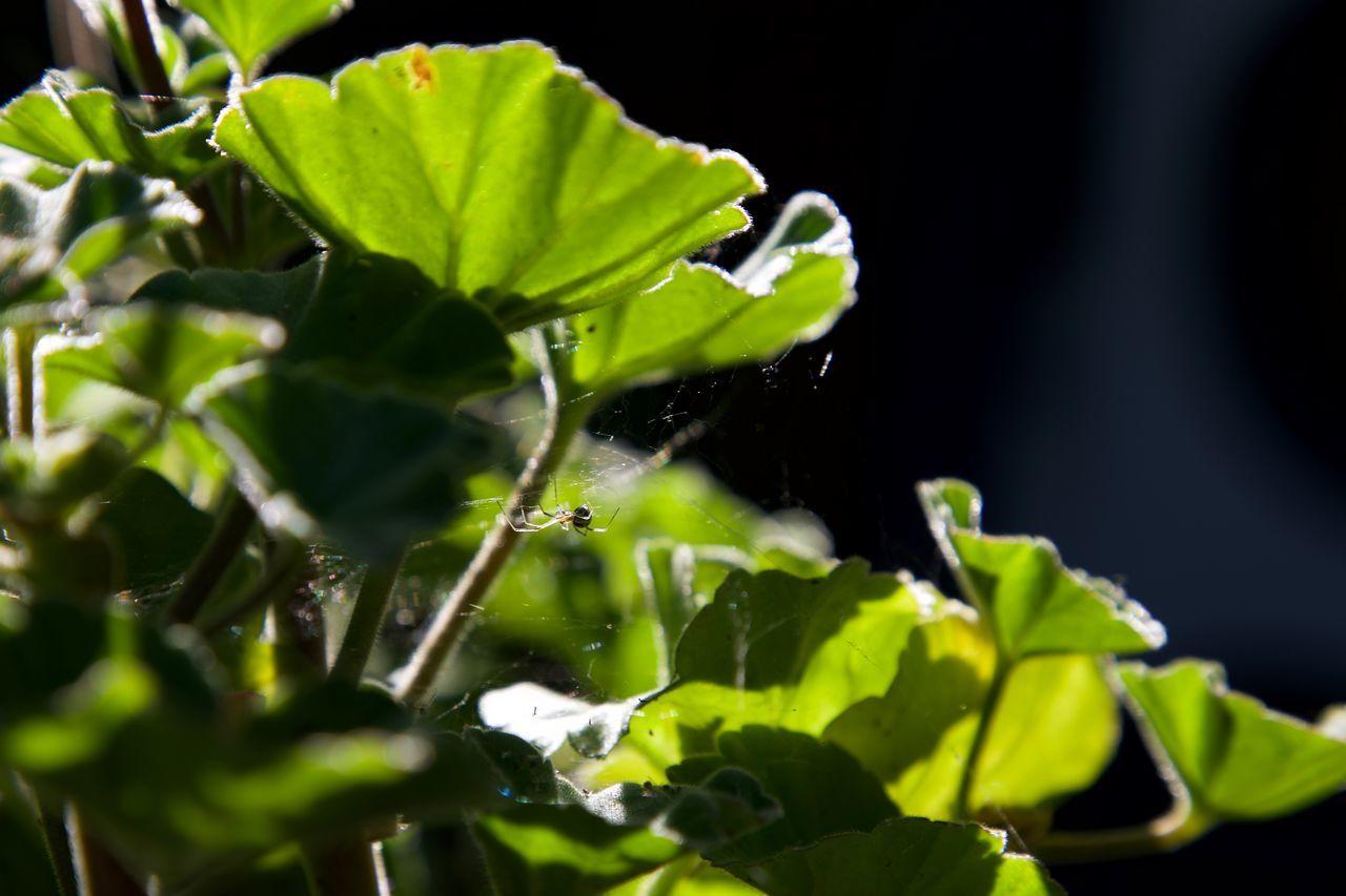 little spider Dust Garden Green Leaves Light Selective Focus Spider Spider Web
