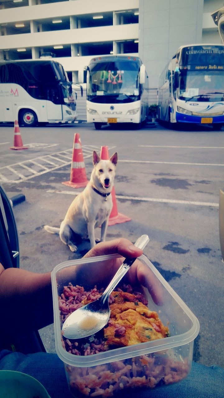 pets, domestic animals, mammal, dog, food and drink, one animal, real people, one person, human body part, car, food, mode of transport, transportation, land vehicle, eating, sweet food, human hand, day, outdoors, women, ice cream, frozen food, freshness, people