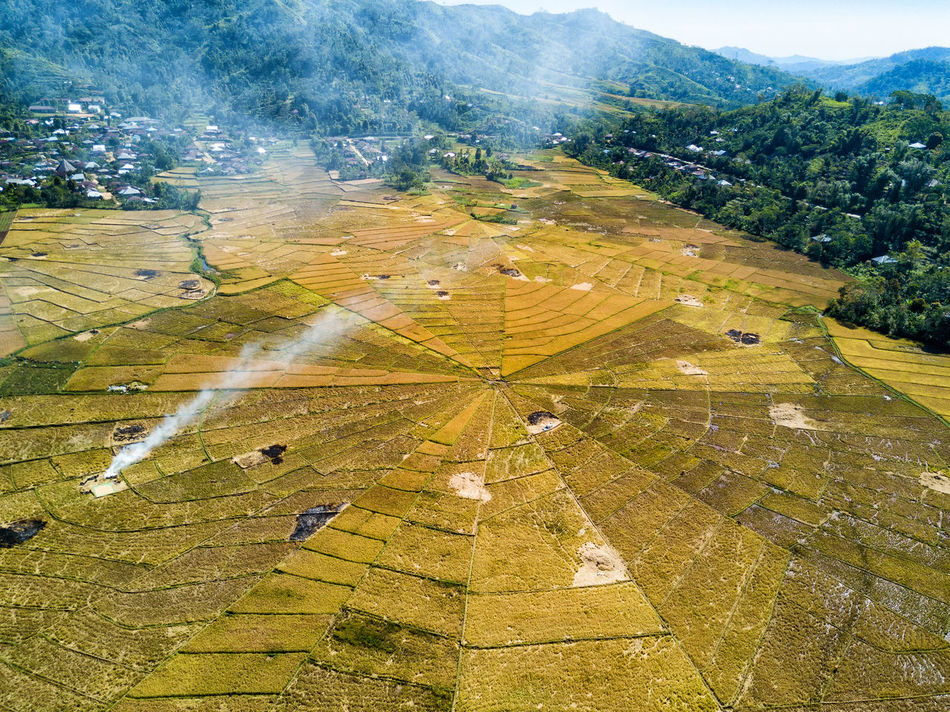 Aerial view of the harvest and burning of rice fields at the famous spider rice fields near Ruteng, Indonesia. DJI X Eyeem Agriculture DJI Mavic Pro Flores Island INDONESIA Rice Spider Tourist Travel Travel Photography Aerial Aerial Photography Aerial View Destination Dji East Nusa Tenggara Flores Harvest Landscape Rice Fields  Spider Rice Fields Tourism Tropical Vacation Yellow