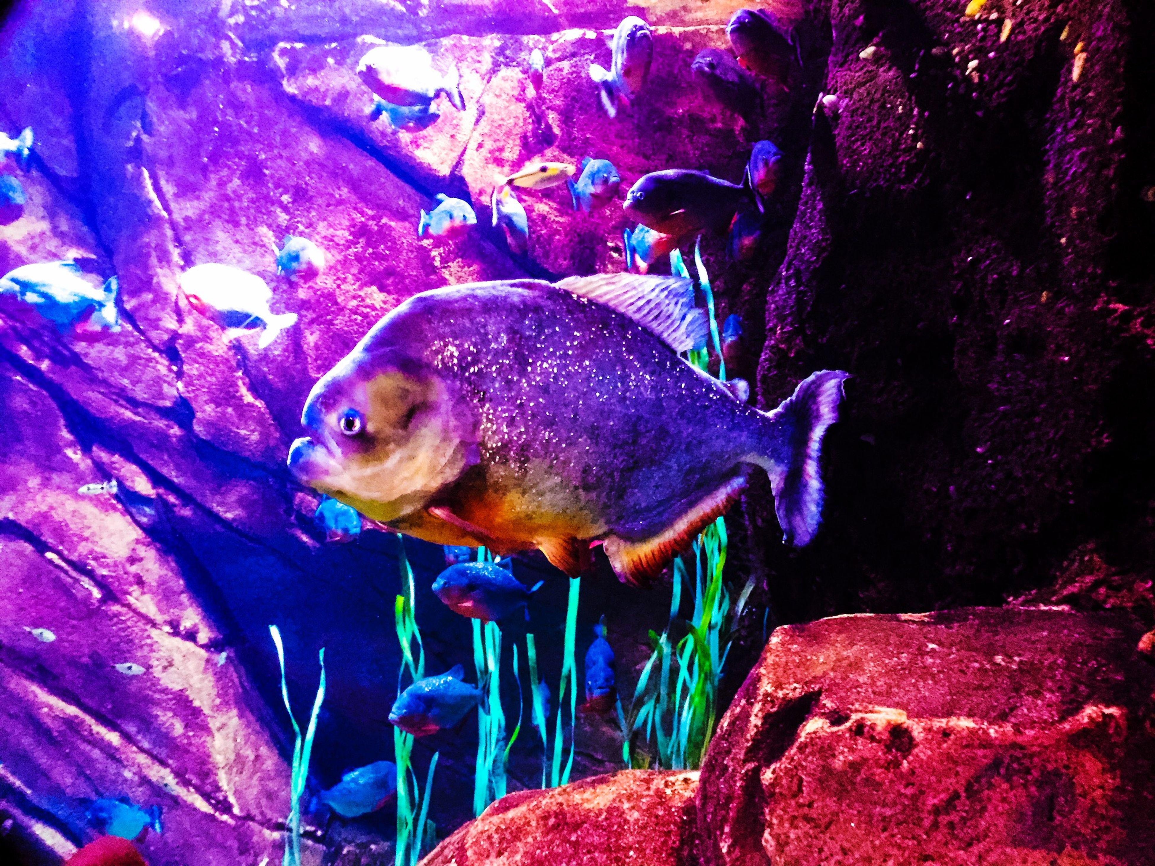 IPhoneography Iphone 6 IPad Edit Fish