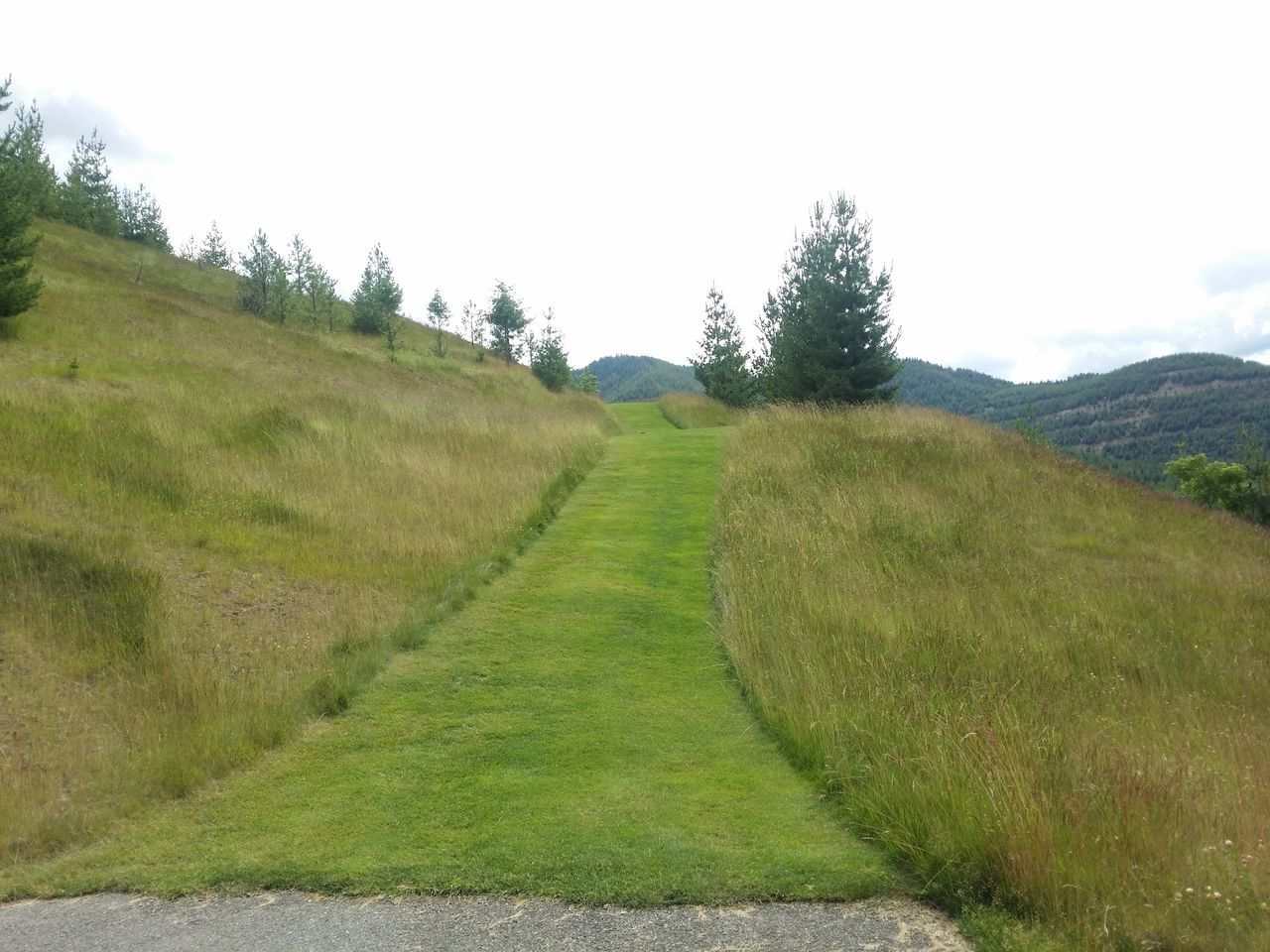 Pathway To Heaven Path To Nowhere Pacific Northwest  Grass Photography Grass And Sky Grassy Hillside Grass Country Side Grassy Path Grassy Hill Meadows And Fields Meadow Walk Meadowsinthemountains Contrasting Landscape Pathway Of Peace Contrast Takeover