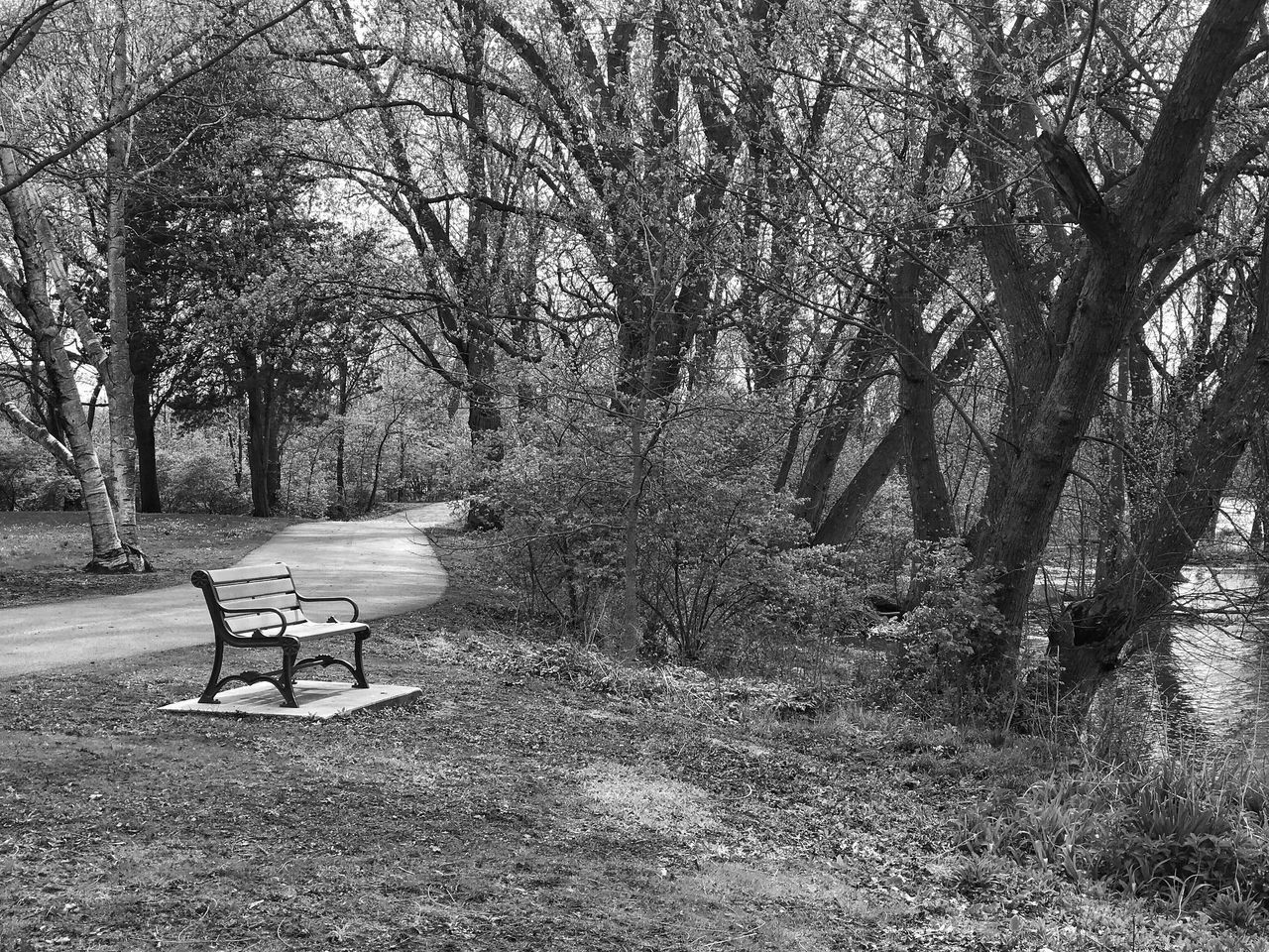 The Secret Spaces Tree Nature Tranquility Beauty In Nature Tranquil Scene Park - Man Made Space Day No People Outdoors Bare Tree Branch Bench The Week On Eyem Springtime Spring The Great Outdoors - 2017 EyeEm Awards BYOPaper!