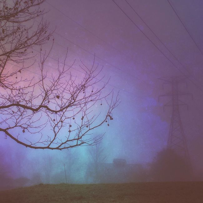 Foggy Morning Mood Landscape Landscape_Collection Rural Scenes High Power Lines Purple Tree