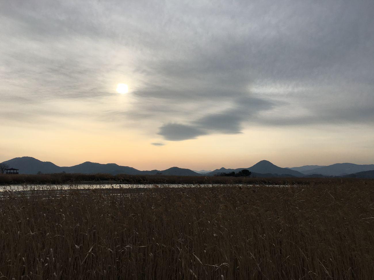 Rail-ro Suncheon Bay Bed Of Reeds South Korea Winter