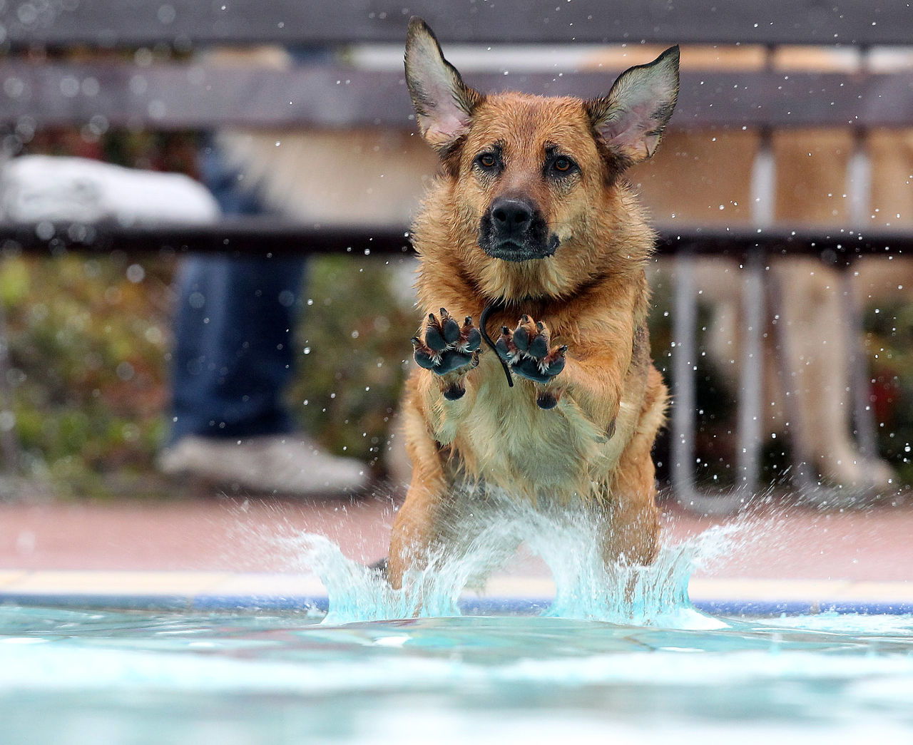 Hundeschwimmen im Freibad von Hof / Germany am 27.09.2015 Action Animal Animal Themes Close-up Dog Dogs Dogslife Hund Hundeschwimmen Looking At Camera Nature No People One Animal Outdoors Pets Rightplacerighttime Sheepdog Swimming Pool Wasser Water Wet