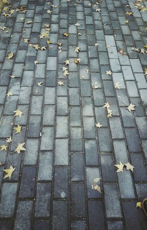 gold autumn ,defoliation Change Outdoors