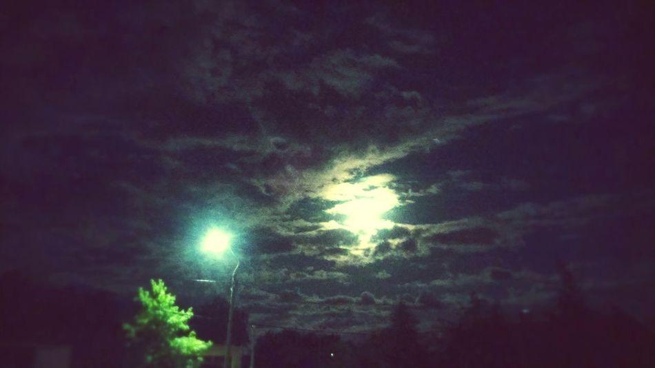 Nocheflorida