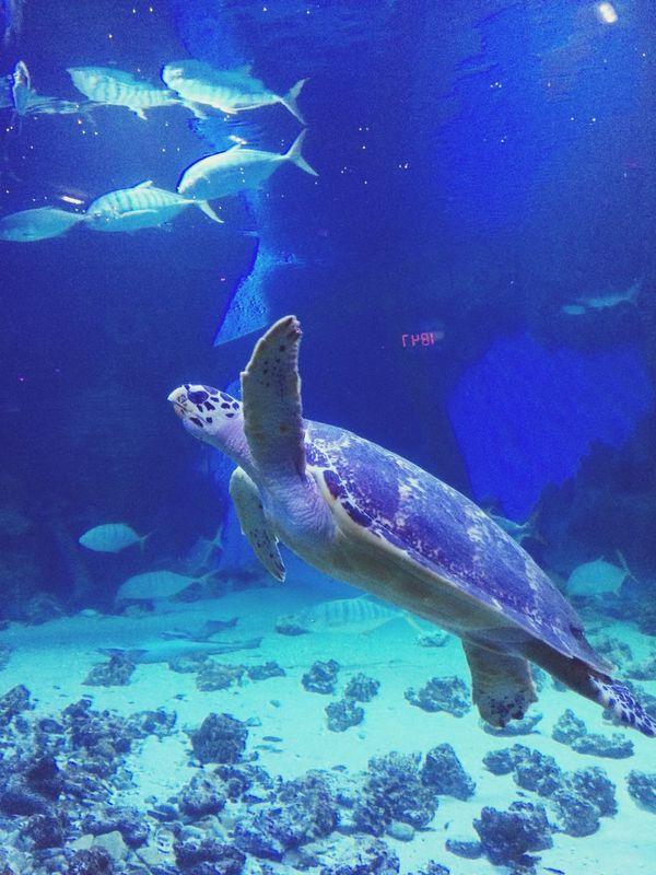 подводный мир океанариум Дмитровка москва #russia