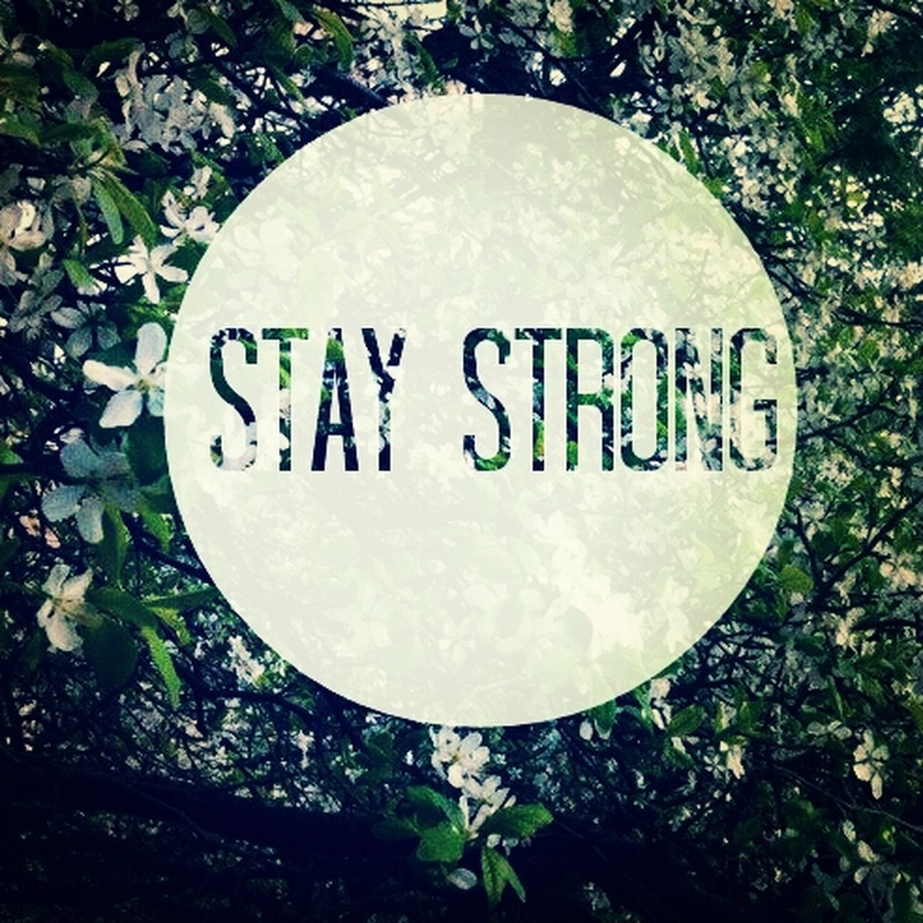 Staystrong Totalmiracle