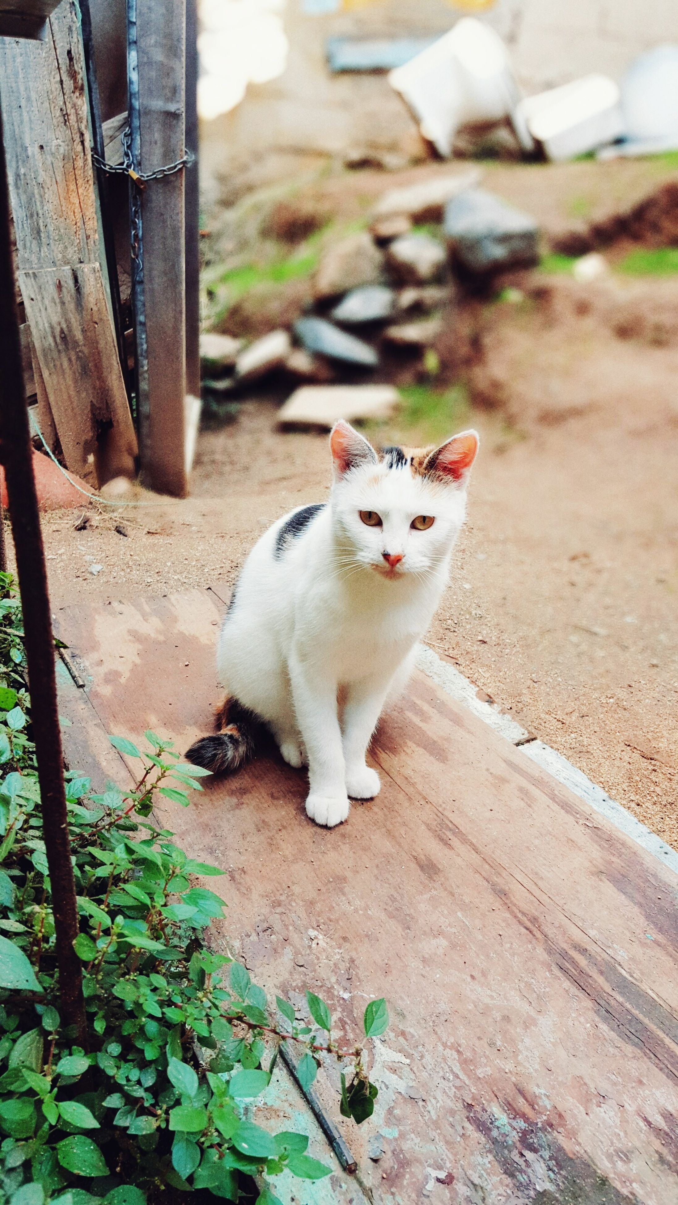 one animal, domestic cat, animal themes, mammal, pets, feline, domestic animals, cat, looking at camera, no people, portrait, sitting, day, outdoors, plant, leaf, nature