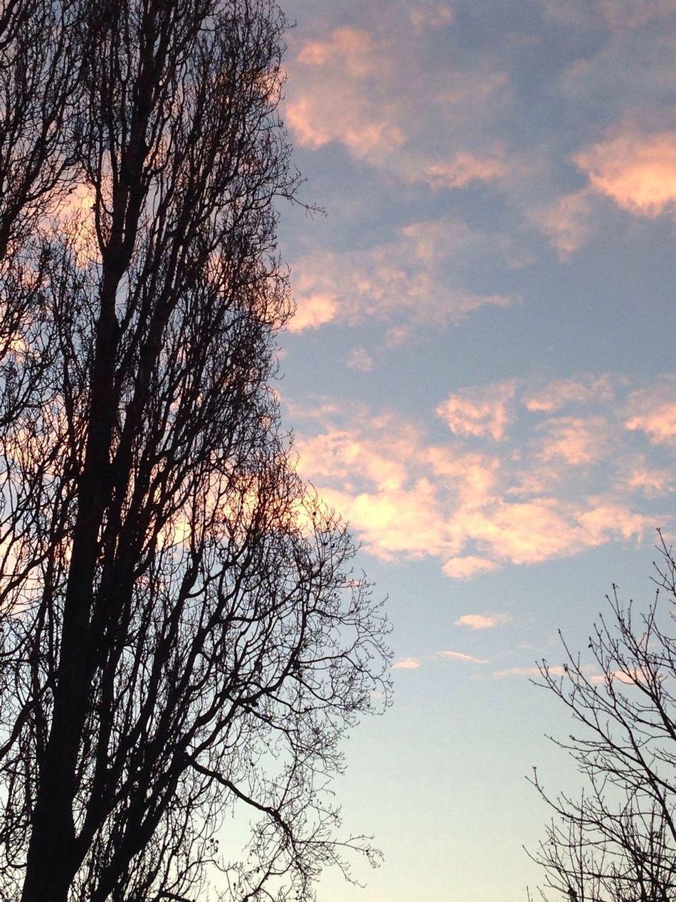 Ambb Beautiful Tree Sky Hotuttefotouguali