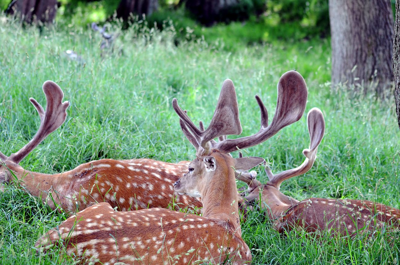 No Filter Animals In The Wild Nature Deer Animal Photography Hanging Around Summer