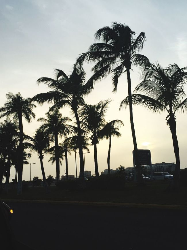 Palm Trees Puerto Rico San Juan PR Sunset Silhouettes Sunset Palm Tree Silhouette