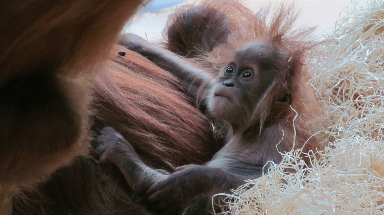 Beautiful stock photos of baby animals, Brown, Close Up, Color Image, Cute
