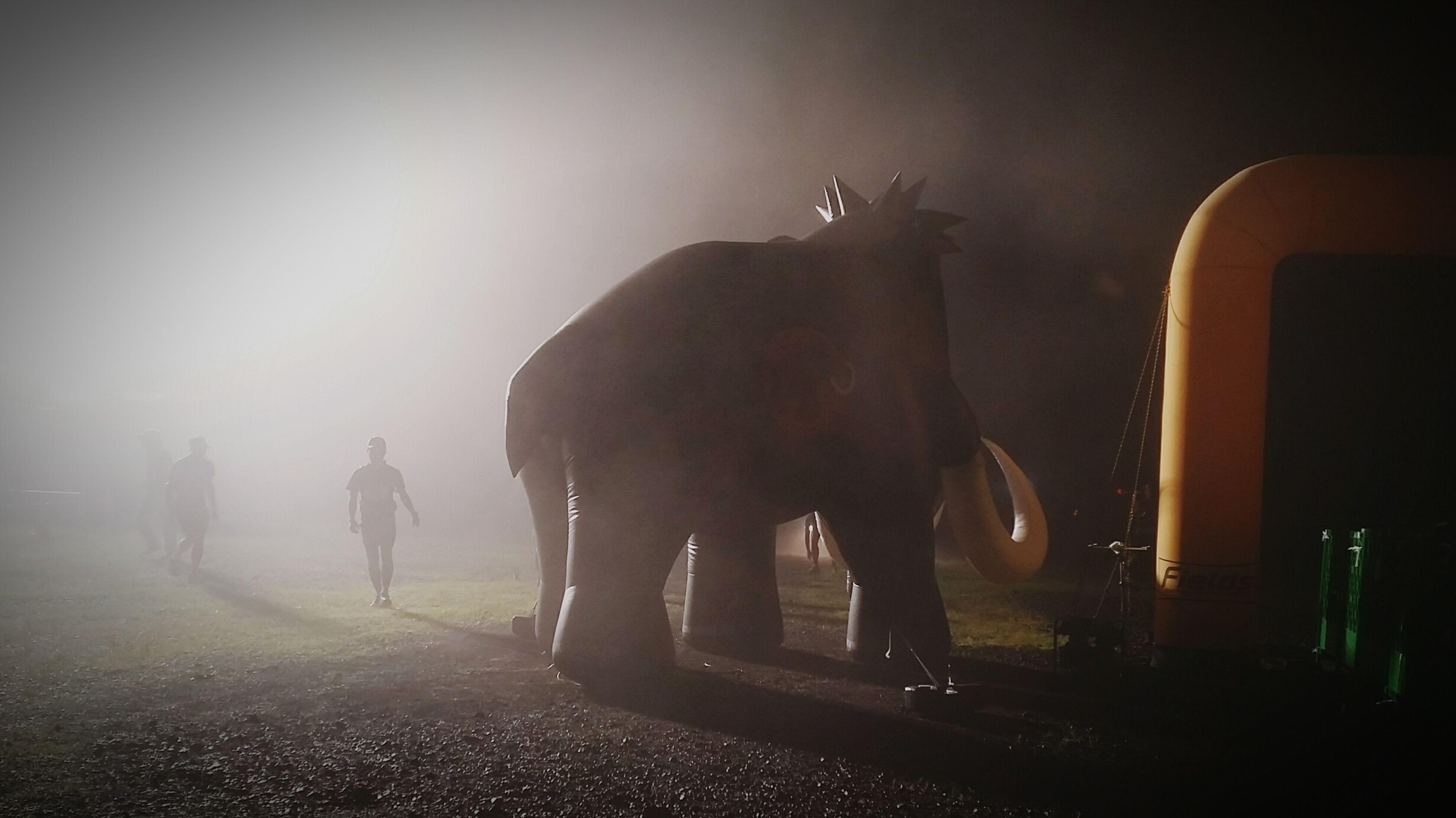 Morning Light Animal Elephant Trailrunning TrailRun  Japan Hokkaidou Mt.taisets