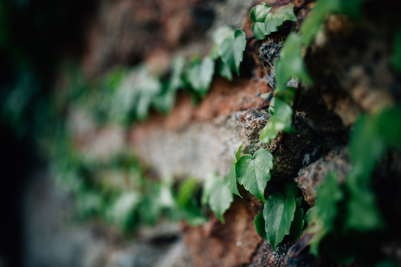 Autumn Autumn Colors Beauty In Nature Close-up Day Extremadura Freshness Green Green Color Growth Heart Heart Shape Ivy Leaf Leaves Nature Nature No People Outdoors Plant Tree