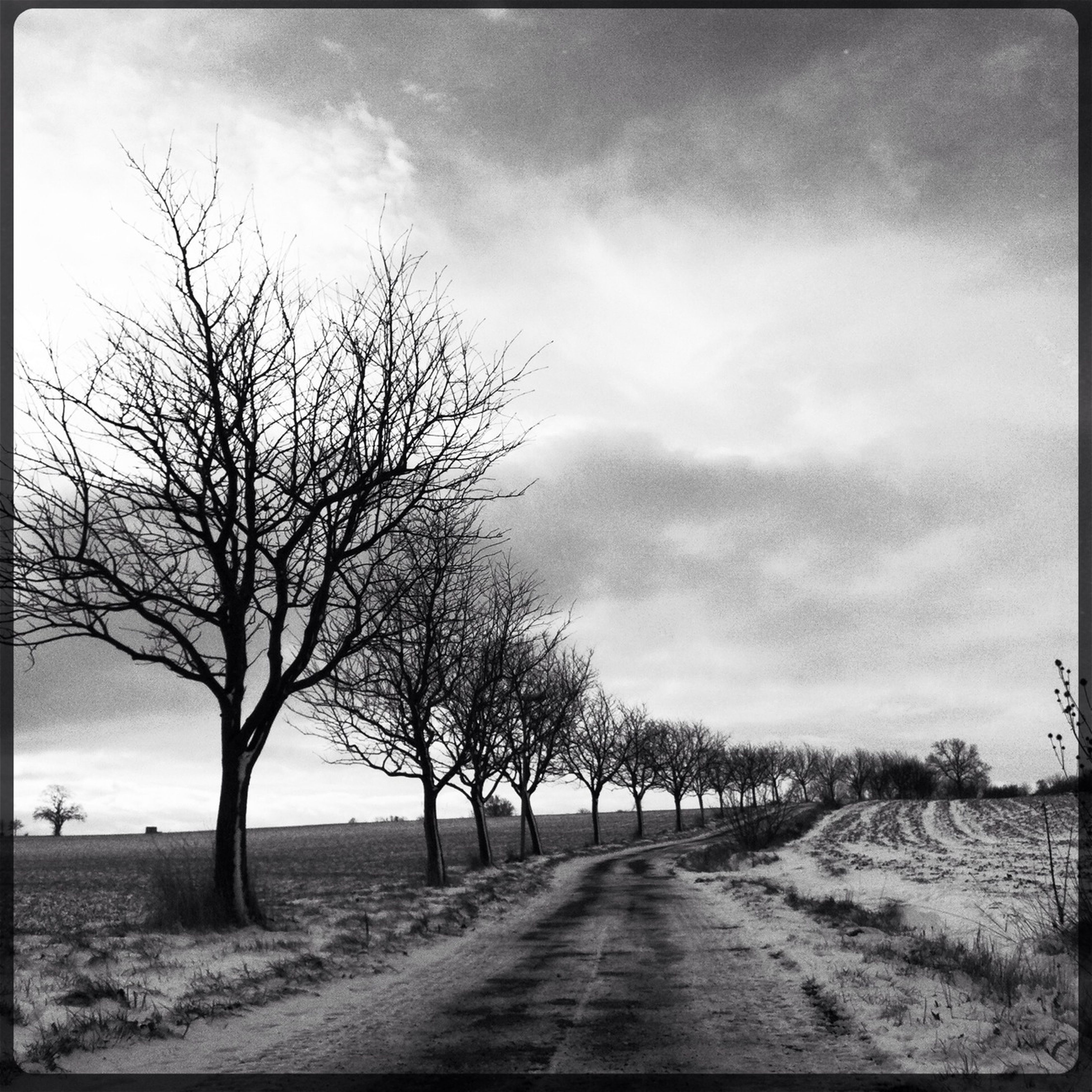 the way forward, bare tree, sky, tree, diminishing perspective, tranquility, tranquil scene, cloud - sky, vanishing point, road, landscape, nature, transfer print, cloudy, transportation, auto post production filter, scenics, field, empty, cloud