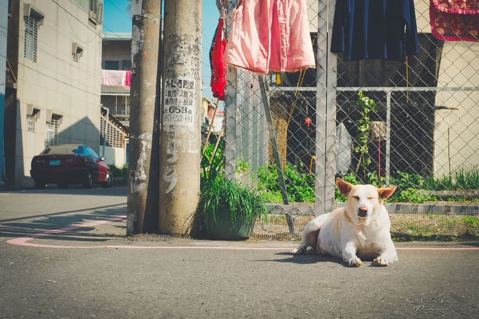 Adapted To The City One Animal Pets Animal Themes Domestic Animals Mammal Dog Domestic Cat No People Day Outdoors Fuji X-T1 Fujifilm FUJIFILM X-T1 富士 EyeEmBestPics Eye4nature EyeEmNewHere Adapted To The City The City Light