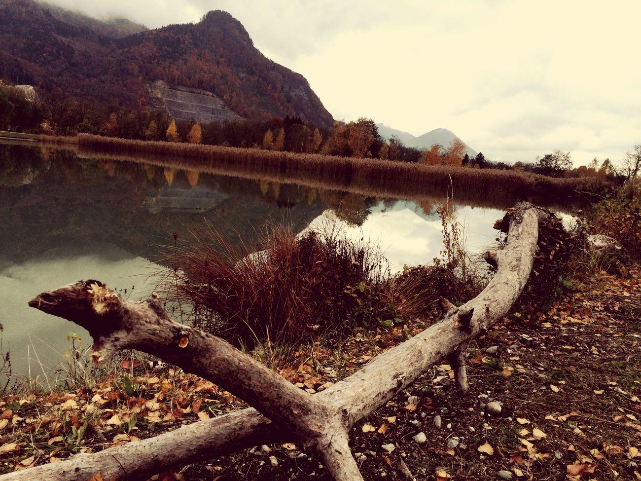 Herbst Holz Inn